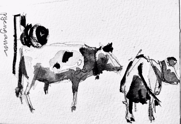 Cows watercolour by Evelyn Yee