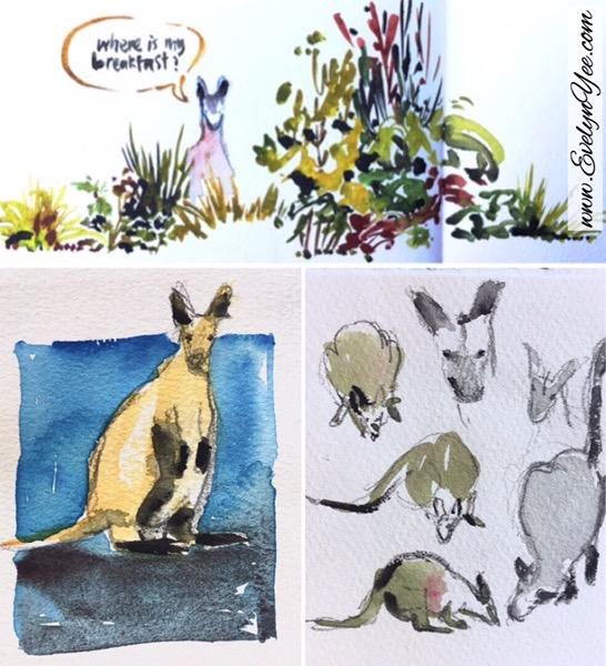 Wallabies sketch by Evelyn Yee