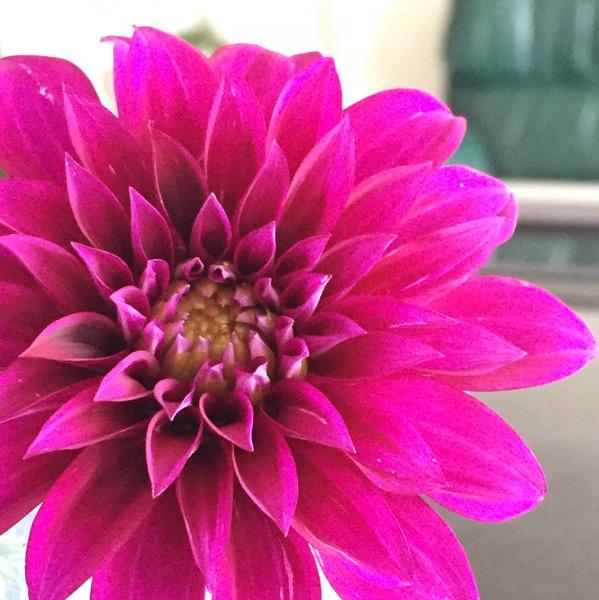Flower by Evelyn Yee