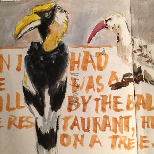 Hornbill, sketch of bird by Evelyn Yee