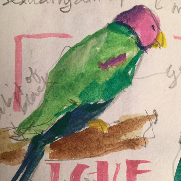 Parakeet, sketch of bird by Evelyn Yee