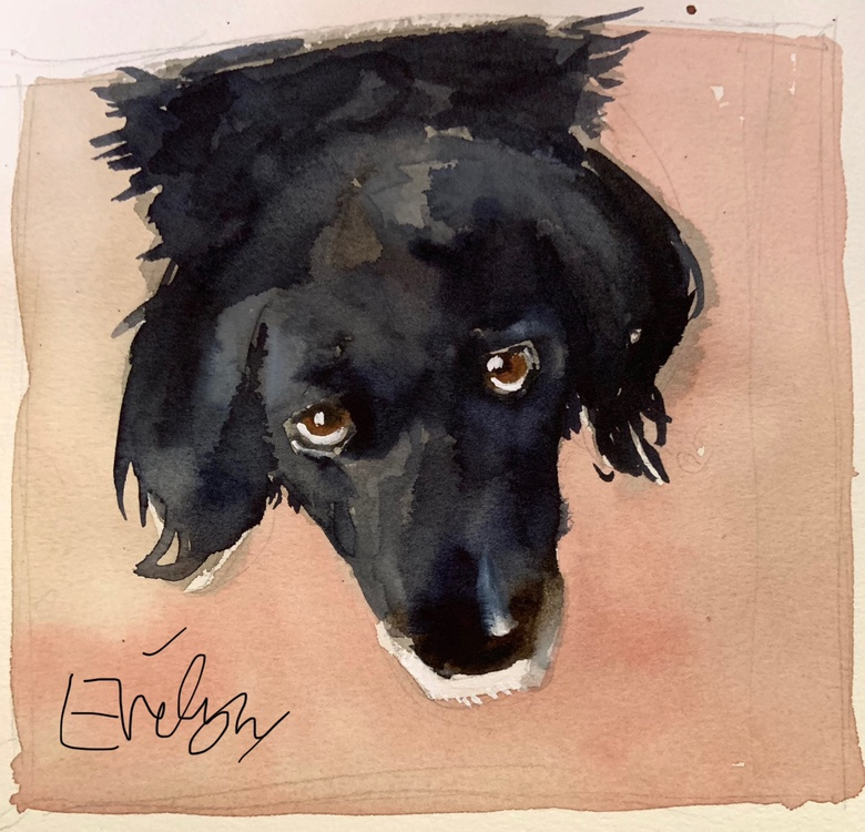 Black dog watercolour by Evelyn Yee