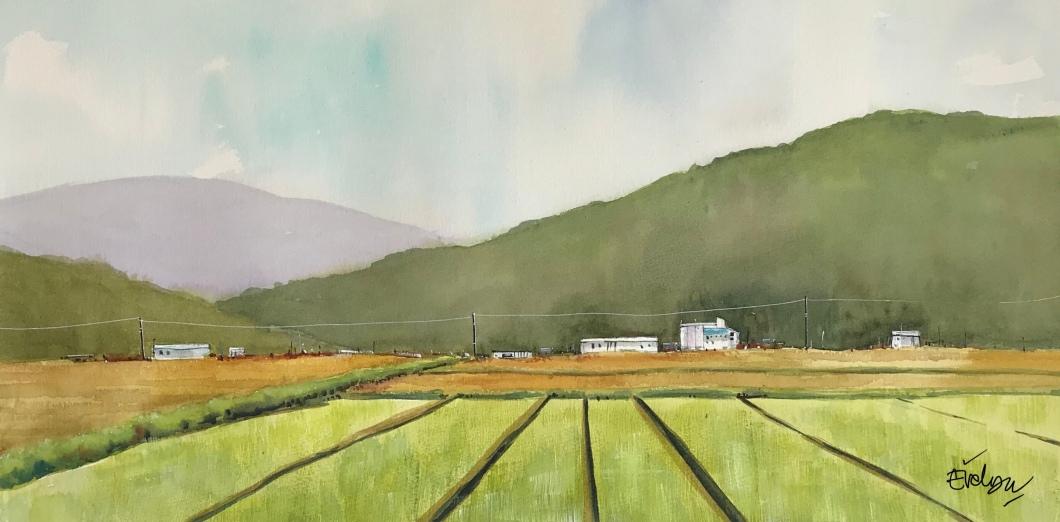 Rice field - Landscape by Evelyn Yee